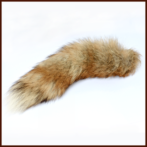 Flauschiger Fuchsschwanz