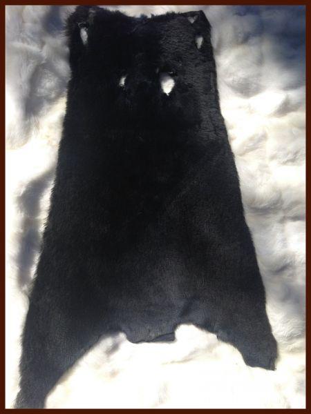 Nutria schwarz